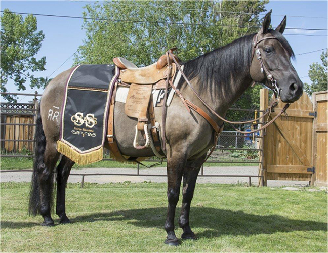 Custom Horse Serapes for Sale by SS Chaps